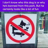 Banned dog.png