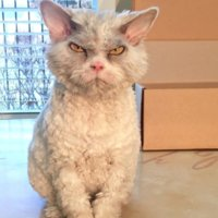 meet-pompous-albert-the-office-cat-who-looks-always-pissed-off-01-15.jpg